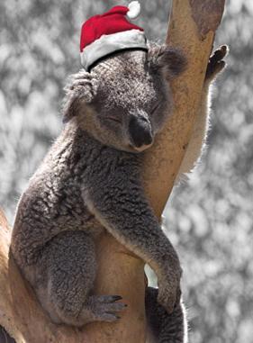 Weihnachtskoala